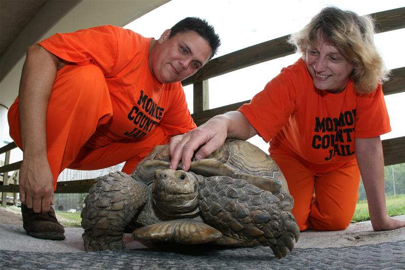 Inmates at the Stock Island Detention Center care for a tortoise.