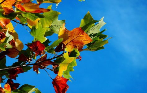 50 fantastic features of fall