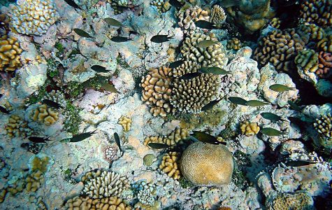 World Wednesday: Coral reefs taking on the bleach