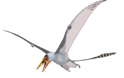 World Wednesday: Fossils show pterosaurs had primitive dinosaur feathers