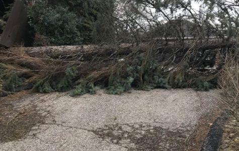High winds whip through area