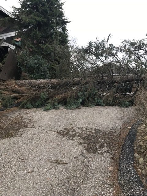 A+downed+pine+tree+blocks+the+entrance+to+a+driveway+of+a+home+in+Bethel+Park.