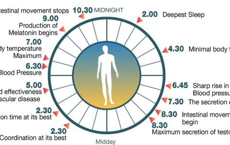 World Wednesday: All you need to know about your sleep-wake cycle