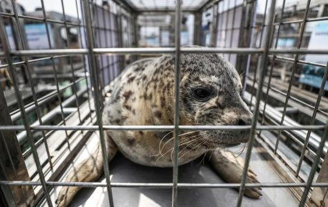 World Wednesday: Animal groups save 37 spotted seal pups from traffickers