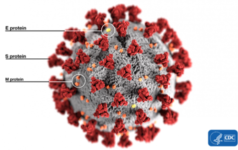 The different parts and structure of the coronavirus.