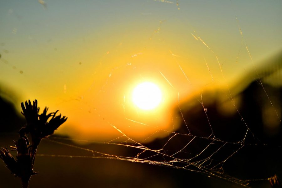 summer+time%2C+sunset%2C+spider+web%2C+trap%2C+sun%2C+nature%2C+spiderweb%2C+silhouette%2C+fair+weather%2C+landscape